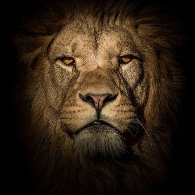"How Moving Averages Can Help You ""Be The Lion"" When You Trade"